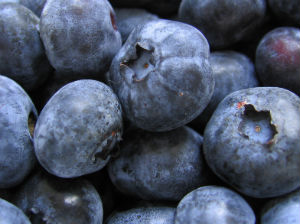 BLUEBERRY fruits