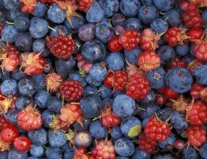 PABA antioxidant