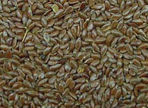 flax seed plant