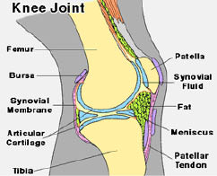 joint diagrams
