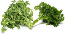 parsley stalks
