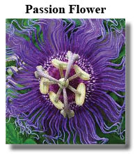 passion flower wonderfully calming
