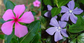 periwinkle colors