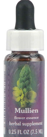 Flower essence: MULLEIN DROPPER 0.25 OZ