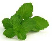 spearmint leaf pic