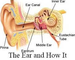 Glue Ear in Adults
