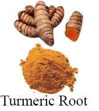 turmeric root sample for article